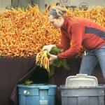 1489104488_Farmers_Carrots